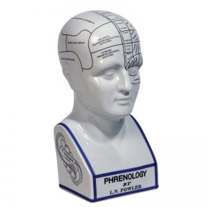Ceramic Replica Phrenology Head